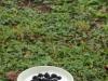 02-fruehstueck-mit-selbst-gepfluegten-beeren1-533x800