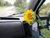 Gertrud, die Busblume